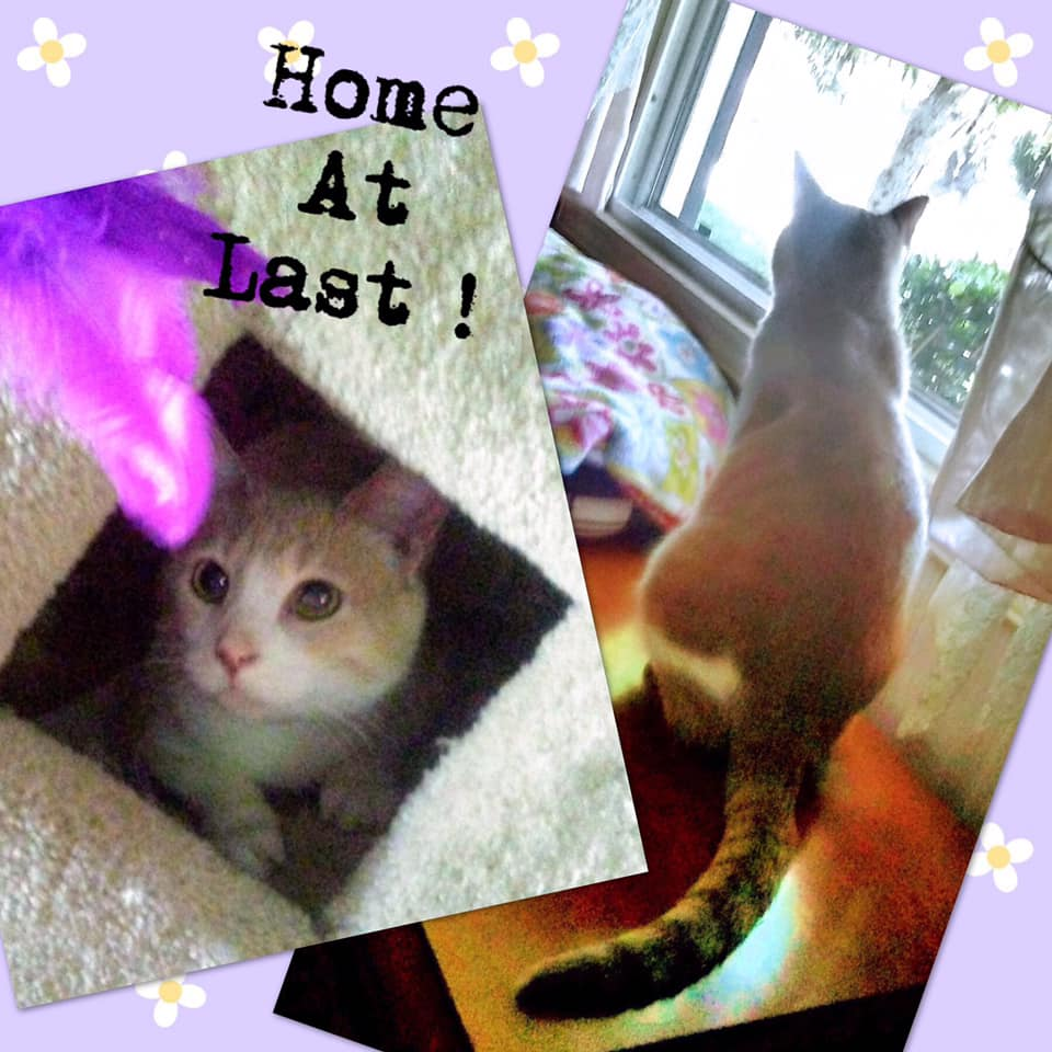 New Home for Sweet Ginger