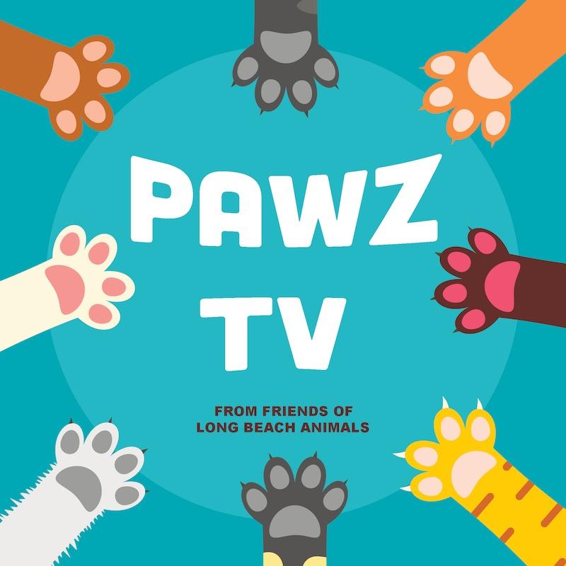 PawzTV