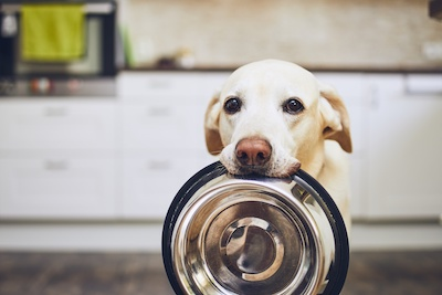 Our Pet Food Giveaway is June 20th